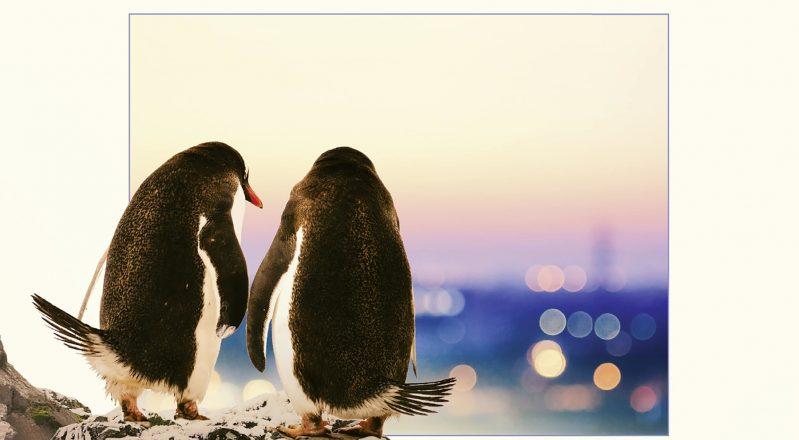 """Pinguini Tattici Nucleari: """"Fuori dall'Hipe"""" è disco di platino"""