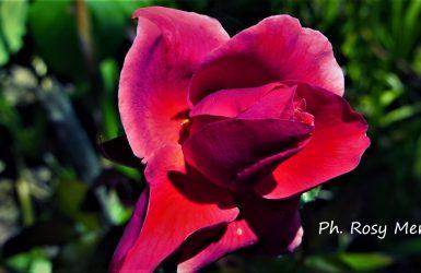 """Anne Brontë: """"Chi non osa afferrare le spine non dovrebbe mai desiderare la rosa"""""""