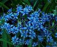 Pablo Neruda: «Presi quel fiore tra le mani»