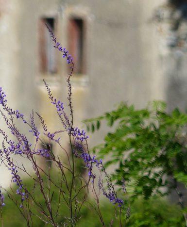 Rosy Merola: l'amore ha il profumo semplice dei fiori di campo