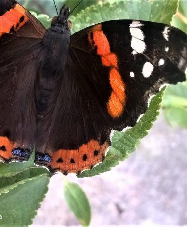"""PoeticaMentis, Alda Merini: """"E se diventi farfalla…""""(da """"Se avess'io"""")"""